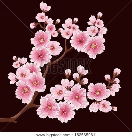 Vector sakura flower branch element. Elegant element for your design. Detailed illustration of sakura branches with flowers on dark background. Cherry blossom