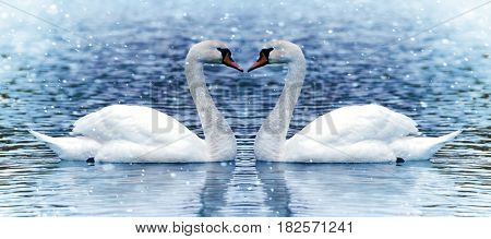 Two swan on the lake close up image