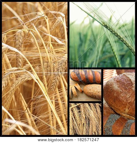 Wheat and bread ,close up image .