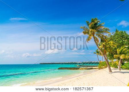 Beautiful tropical Maldives island, white sandy beach and sea  with palms tree around