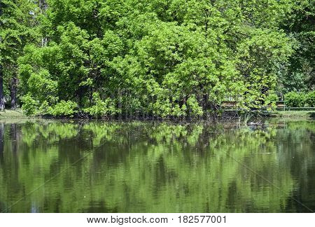 Trees in the park reflecting in water in a beautiful spring day