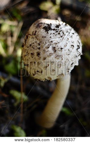 Mushroom with leaf mushroom photo forest photo forest mushroom forest mushroom photo. Wild Mushrooms.