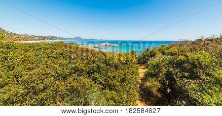 Plants by Scoglio di Peppino shoreline Sardinia