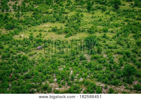 Aerial View Of An Elephant In The Okavango.