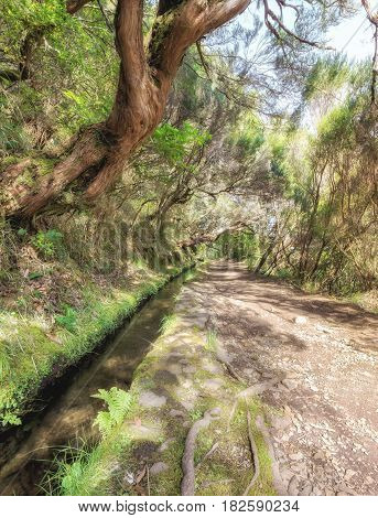 25 fountains levada tracking path going though deep forest. Madeira island, Portugal