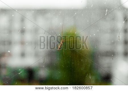 Mosquito on window glass on blurred background