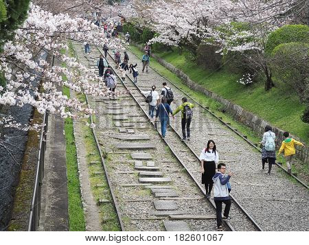 Keage Incline, Kyoto, Japan - April 5, 2017 : People walking along the tracks of a disused railway under beautiful cherry blossom trees. Landmark for spring scenery of amazing cherry blossoms in Kyoto