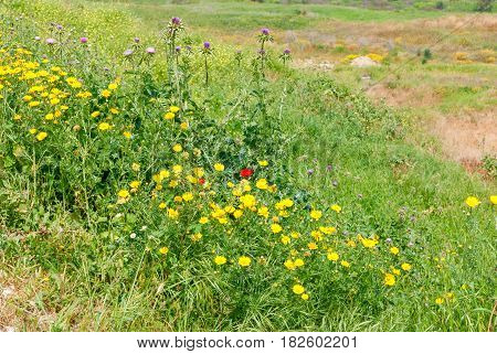 Green summer grass meadow with bright wildflowers.