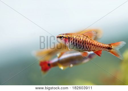 Aquaria still life scene, colorful freshwater fishes macro view, shallow depth of field.