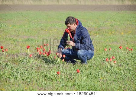 A Man In A Jacket On A Field Of Tulips. Glade With Tulips