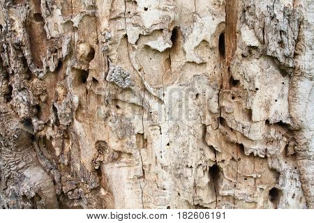 Old tree trunk with holes from woodworm and woodpecker. Brown wooden background in a rustic style.