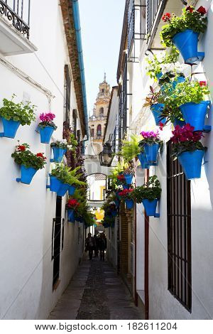 Flowers in flowerpot on the white walls on famous Flower street Calleja de las Flores in old Jewish quarter of Cordoba Andalusia Spain
