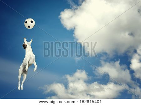 Little dog catching a ball in midair