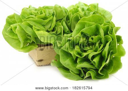 fresh lettuce in a wooden crate on a white background