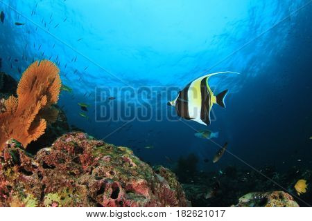 Coral reef fish underwater