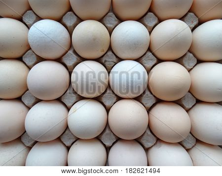 Chicken farm eggs natural food production useful