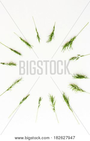 Ears of a green cereal form a pattern of a circle lying on a white background. Top view. Concept of healthy lifestile, freshness and spring mood. minimalistic picture of the ripening harvest. flat lay