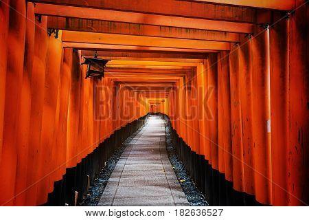 Tori Gate In Fushimi Inari, Kyoto