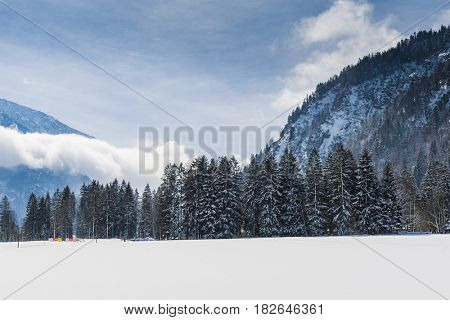Tall forest trees in a cold winter landscape dusted with snow at an alpine resort with fresh white powder in the foreground and distant high alpine peaks with low cloud