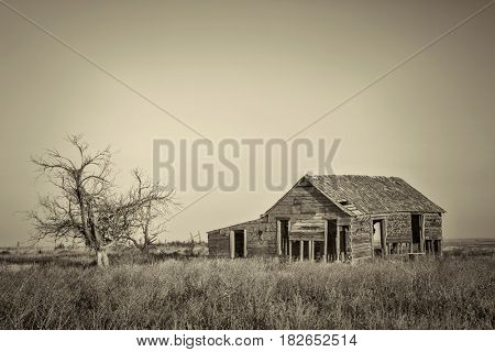 old abandoned homestead with hawk nests on eastern Colorado prairie, platinum toned black and white image