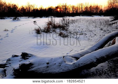 dry trunk on the snowy wilderness and sunset