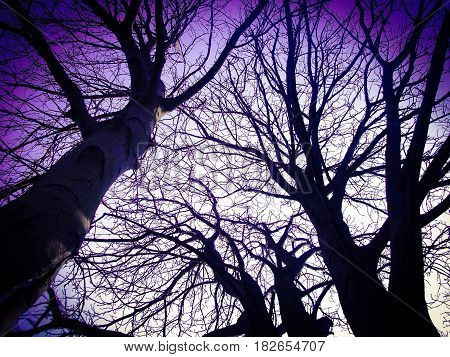 Creepy trees in the forest at twilight
