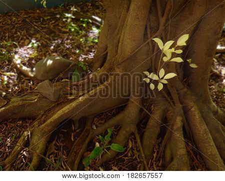 Tree roots. Foreground of tree roots. Closeup of a tree roots. Tree trunk