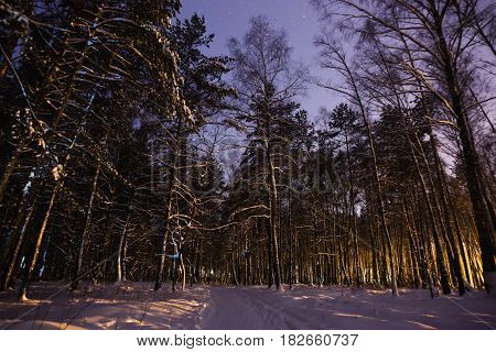 Pine trees in the snow in the forest with a warm glow. Winter beautiful starry forest night landscape. Astrophotography. Clear starry sky in forest. Slow shutter speed. The spectacular sky. Scenic view in forest.