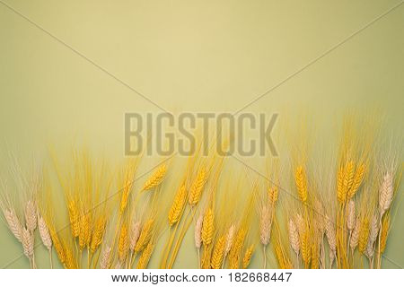 Spikelets On Background