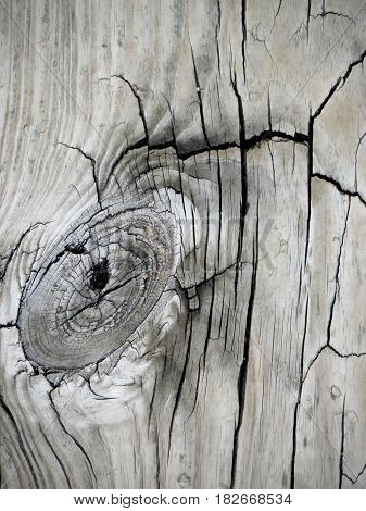 A closeup knothole in a detailed, textured background of a weathered old floor, barn, fence wood plank.
