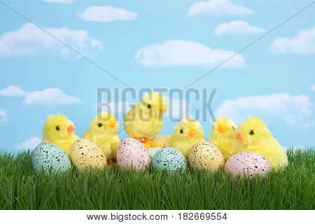 Fuzzy baby chicks in grass behind speckled eggs. One chick standing on eggs. Blue background sky with clouds.