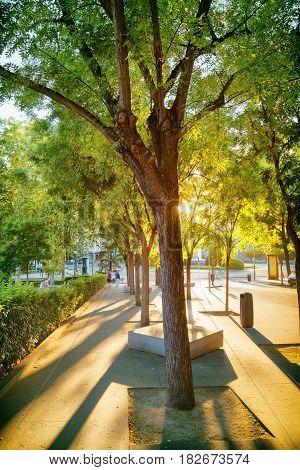 Street Of Madrid In Rays Of Evening Sun. Calle De Felipe Iv