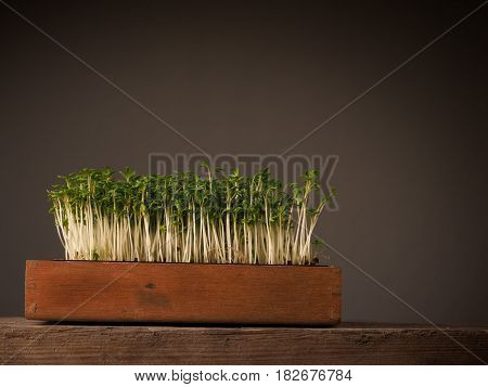 Wooden box with organic cress on an old rustic table with space for text