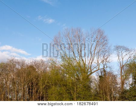 A Skyline Of Trees Crisp And Clear With A Blue Sky With Some Small Little Cloud Line On A Sunny Afte