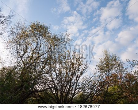 Beautiful Tree Tops And Wonderful White And Blue Spotted And Splodge Sky With Nice Vibrant Natural C