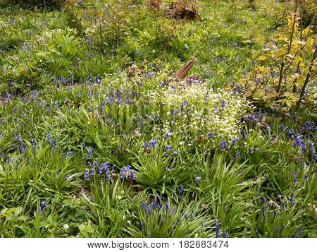 A Beautiful Overhead Of A Meadow And Field Full Of Various Plants White, Blue, Orange And Green In T
