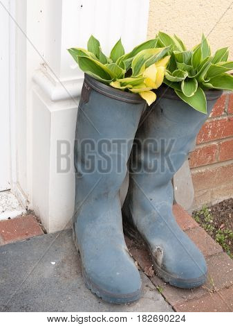 two wellies boots outside the front door porch with flowers and plants placed inside resting in growing in cool pretty ornate modern new vintage retro uk usa interest