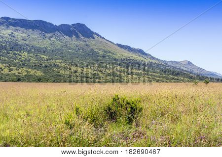 Green and yellow grass field and mountains in Africa