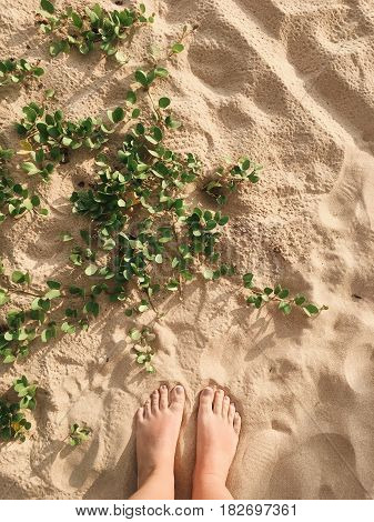 On the sand grows green ivy and bare feet