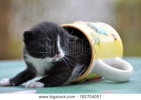 Little kitten out of the cup of tea. Cute kitty in a cup