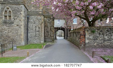 ROCHESTER, UK: Gardens outside the Cathedral with medieval walls and spring colors