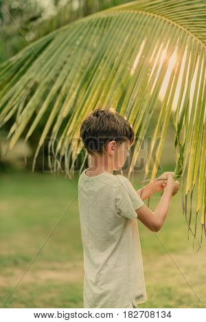 on a Sunny summer day on green grass boy and a large palm branch