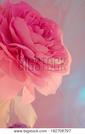 closeup of a beautiful Bud to large pink rose