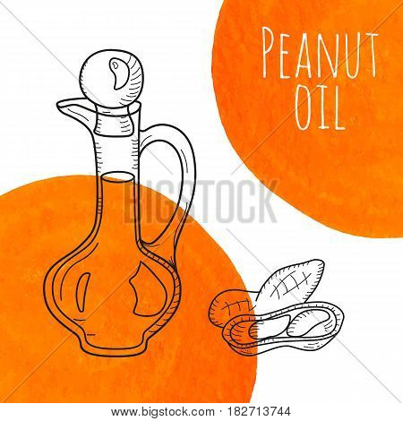 Hand drawn peanut oil bottle with orange watercolor spots. Isolated cute decanter with healthy cooking oil and peanut. Sketchy doodle illustration for aroma therapy, cosmetic, organic shop. Glass jug.