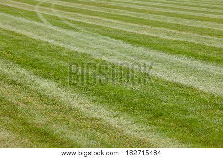 Hippodrome green grass track line. Fresh natural field. Horizontal