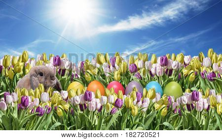 Bunny with Eggs and pink and white Tulip blue sunny sky greeting Happy Eastern textspace