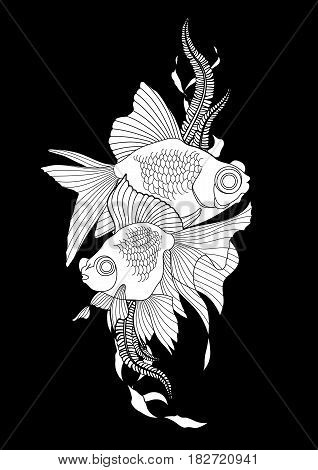 Graphic couple of telescope fish. Vector freshwater creature isolated on black background. Coloring book page design for adults and kids