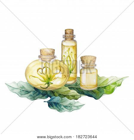 Watercolor ylang ylang oil. Hand painted bottles, leaves and flowers isolated on white background. Herbal medicine and aroma therapy
