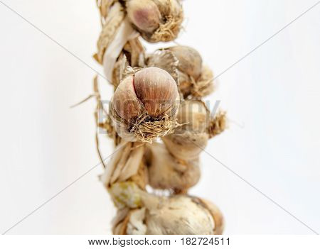Common garlic in row on white background