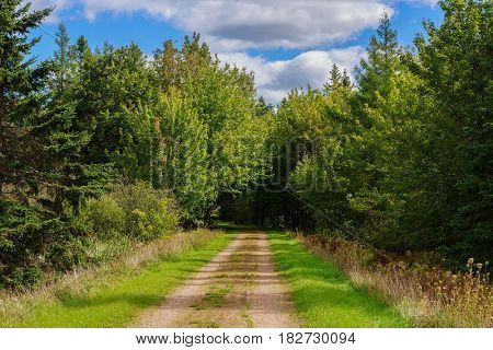 Hiking trail in rural Prince Edward Island, Canada know as the Confederation Trail or the Trans Canada Trail.